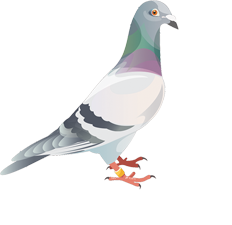 The Royal Pigeon Racing Association