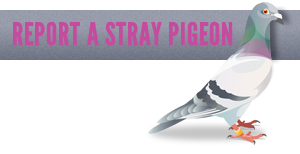 Report a lost or stray pigeon you have found