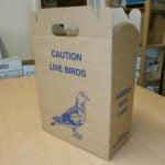 Pigeon Box