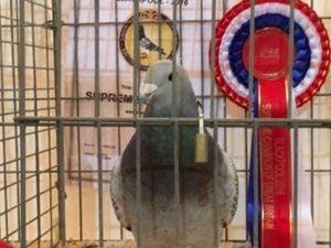 Supreme Champion 2016
